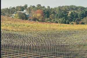 gruner veltliner hahndorf hill winery