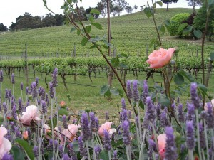 Hahndorf Hill Sauvignon Blanc and roses