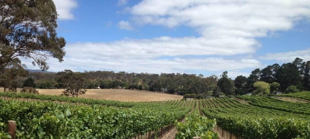 Gruner Veltliner at Hahndorf Hill Adelaide Hills